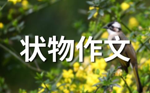 ★小动物作文(通用七篇)